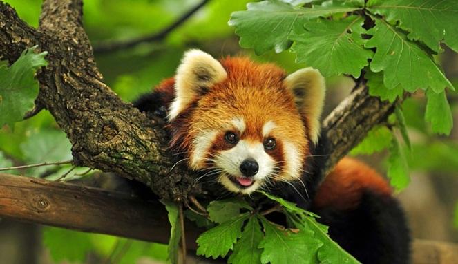 Perkembangan Dari Firefox Mozilla